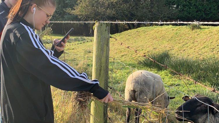 lauren sheepcrop